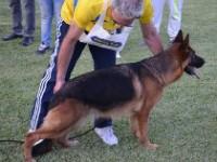 Allevamento_Di_Villa_Andrei_3.jpg