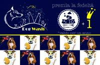DOG_WASH_Toelettatura_Cava_de'_Tirreni.JPG
