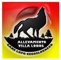 Villa_Lobos_Allevamento_Cane_Lupo_Cecoslovacco.jpg