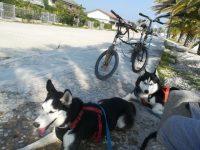 the-dutch-dog-di-claudia-tomassini-4.jpg