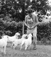 Labradors_Land_Allevamento_Labrador_Retriever_di_casa_Picca_1.jpg