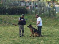 Centro Cinofilo e di Addestramento VARMAS DOG - DELLA ROCCA DEI SAVELLI_1