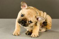 sardazootecnica-prodotti-veterinari-e-articoli-zootecnici_3.jpg