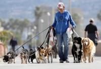 Martindog-Dog-Sitter-e-Pensione-per-Cani-Bari-1.jpg