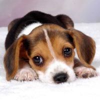Personal-Dog-Trainer-Italia-Scuola-di-Educazione-cinofila_4.jpg