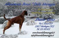 Biglietto Nuovo 2013.jpg