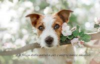 anibio-prodotti-biologici-specifici-per-cani.JPG