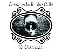 Allevamento_Amatoriale_Border_Collie_di_CASA_LIAA.jpg