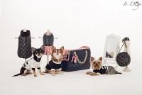 collezione it-dogs.jpg