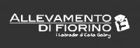 Di-Fiorino-Allevamento-Labrador.png