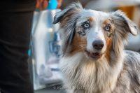 Michele_Baruffi_Pet_Photography_2.JPG