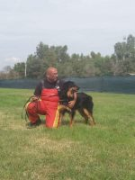 exercise-and-performance-dogs-trainer-1.jpg
