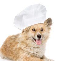 cuoco-pet-3.jpg