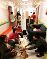 fridas-friends-onlus-interventi-assistiti-con-gli-animali-pet-therapy-1.jpg