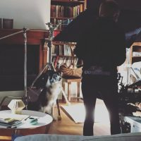 Dogstudios-2.jpg