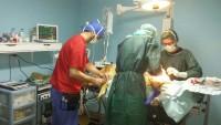 veterinari caltagirone_4.jpg