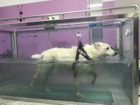 fisioterapia-veterinaria-pisa-4.jpg