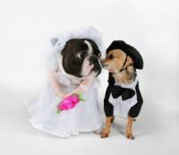 wedding_dogsitter_genova_cani-matrimonio-300x260.jpg