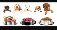 dott-ssa-laura-mancinelli-specialista-in-nutrizione-e-fitoterapia-veterinaria-2.jpg