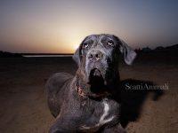 scattianimali-fotografo-di-animali-4.jpg