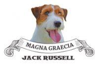 Allevamento-jack-russell-terrier-MAGNA-GRAECIA.jpg