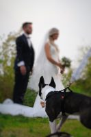 Athena_Dog_Sitter_per_Matrimoni_4.JPG