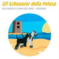 Allevamento-schnauzer-della-Pelosa.jpg
