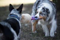 frisbeescape-fe-frisbee-e-giochi-per-addestramento-del-cane-3.jpg
