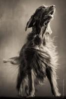 Paul_Croes_Animal_Photography_4.jpeg