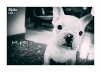 Pet-Photography-Cagliari-4.jpg