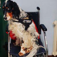 animal-touch-pet-therapy-e-stimolazioni-sensoriali-4.jpg
