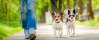 dogsitter.jpg