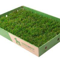 GreenInBox_2.jpg