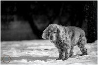 Micaela_equine-pet_photography_1