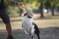frisbeescape-fe-frisbee-e-giochi-per-addestramento-del-cane-1.jpg