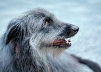 Pet Photography | Amkira