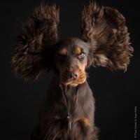 Paul_Croes_Animal_Photography_3.jpeg
