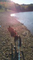 the-dutch-dog-di-claudia-tomassini-2.jpg