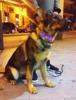DOG_WASH_Toelettatura_Cava_de'_Tirreni.JPG