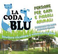 la-coda-blu-pensione-per-cani.jpg