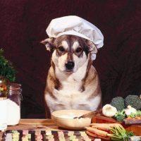 cuoco-pet-2.jpg