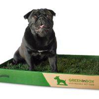 GreenInBox_1.jpg