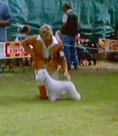 Allevamento West Highland White Terrier Alekos pic.JPG