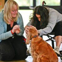 scuola-di-pet-therapy.jpg