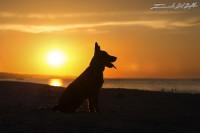 www.emanueledelbufalo.com #pet photography #crono #location #ancona.jpg