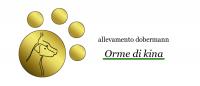 Orme-di-Kina-Allevamento-Dobermann.png