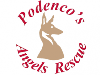 podencos-angels-rescue.png