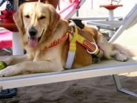Bagno-Overbeach-Spiaggia-per-Cani-Ravenna-2.jpg