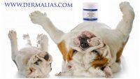 dermalias-prodotti-dermatologici-veterinari-1.jpg