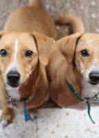 villa-gala-dog-resort-pensione-per-cani-gallarate-3